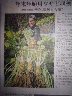 wasabi-harvest.jpg