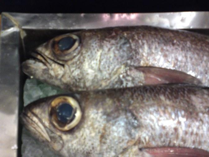 Local Shizuoka Fish & Seafood at Parche Fish Market in Shizuoka City: including Bermuda Fish!